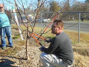 Community Garden Trimming Tree